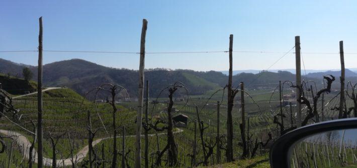 venice venise prosecco tour leader planner accompagnatrice guida ambientale escursionistica tour